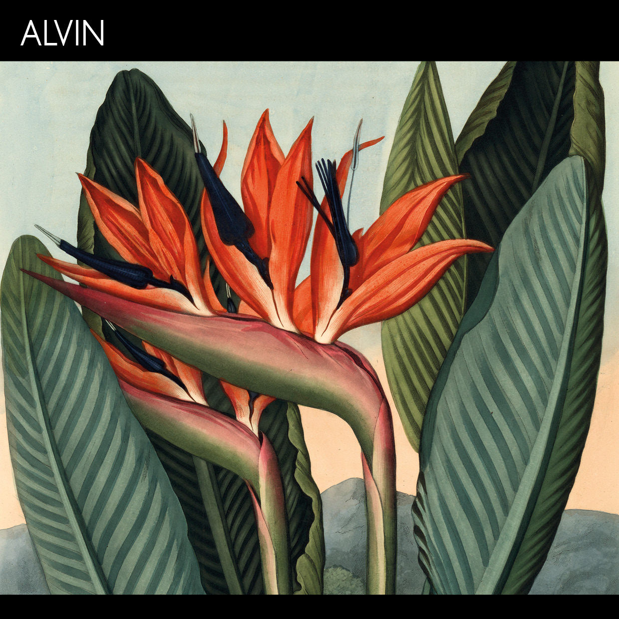 a red flower with pointy leaves and the logo fro database Alvin